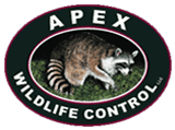Apex Wildlife Control